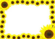 Frame made of sunflowers. Stock Images