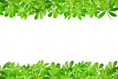 Frame made from sweet woodruff leaves Royalty Free Stock Photos