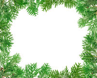 Frame made with thuja twigs Royalty Free Stock Photography