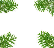 Frame made with thuja twigs Royalty Free Stock Photos
