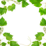 Frame made of vine leaves Stock Photography