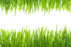 The frame made of  wet grass Royalty Free Stock Photography