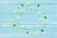 Frame made of white wild flowers and leaves on blue wooden background. royalty free stock photo