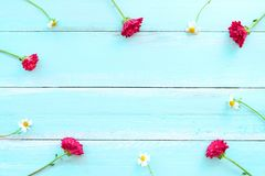 Frame made of white wild flowers and red chrysanthemum flowers on blue wooden background. Flowers composition.  Frame made of white wild flowers and red Royalty Free Stock Photos