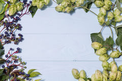 Frame made of wild grapes and fresh green hops Stock Images