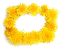 Frame made of yellow dandelions Stock Photo