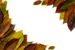 Frame made of yellow green leaves, branches on white background. Flat lay, top view. Autumn still life royalty free stock images
