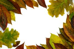 Frame made of yellow green leaves, branches on white background. Flat lay, top view. Autumn still life royalty free stock image