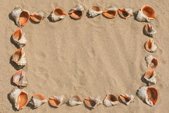 Frame maked of shells. Stock Photos
