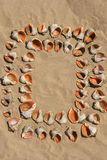 Frame maked of shells. Royalty Free Stock Photo