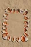 Frame maked of shells. Royalty Free Stock Photos