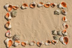 Frame maked of shells. Stock Image