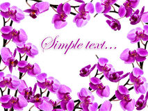 Frame with many orchids. Congratulatory frame with many orchids Royalty Free Stock Photos
