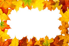 Frame of maple autumn leaves. Against of white Royalty Free Stock Photo