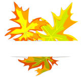 Frame from maple leaves 2 Stock Photos