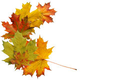 Frame from maple leaves Stock Photography