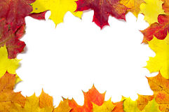 Frame with maple leaves Stock Image