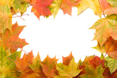 Frame from maple leaves Stock Images