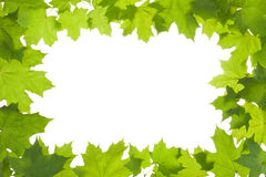 Frame of maple leaves in backlight Royalty Free Stock Photography
