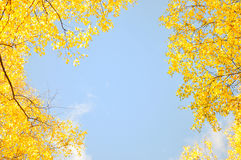 Frame by maple leaves in city park Stock Photos