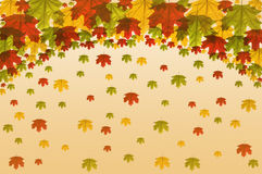 Frame maple leaves Royalty Free Stock Images