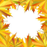 Frame of maple leaves. Royalty Free Stock Images