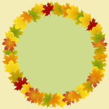 Frame of maple leaves round Stock Photos