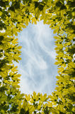 Frame maple leaves sky Royalty Free Stock Images