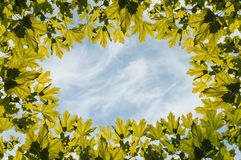 Frame maple leaves sky Royalty Free Stock Photo