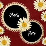 Frame met camomiles Stock Foto