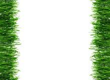 Frame met dauw op de lentegras Stock Foto's