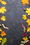 Frame met de bladeren van de de herfstesdoorn Het malplaatje van de aarddaling voor ontwerp, menu, prentbriefkaar, banner, kaartj royalty-vrije stock afbeeldingen