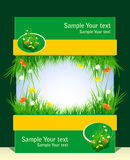 Frame met gras en bloemen voor presentatie Royalty-vrije Stock Fotografie