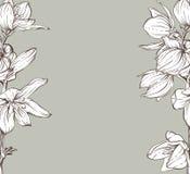 Frame met hand getrokken bloemen Stock Fotografie