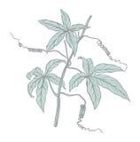 Frame met hand getrokken bloemen vector illustratie