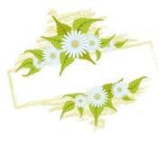 Frame met madeliefjes Royalty-vrije Stock Afbeeldingen