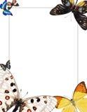 Frame met vlinders voor photomontage Royalty-vrije Stock Afbeelding