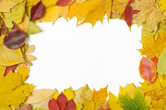 Frame of mixed autumn leaves. Frame made of mixed autumn leaves. Clipping path included Royalty Free Stock Images