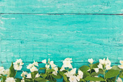 Frame of mock-orange flowers on turquoise wooden background Royalty Free Stock Photos