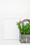 Frame mockup on white background, fresh green rosemary in vintage wood box, Provence style, styled image. For blogging, social media, branding Stock Photography