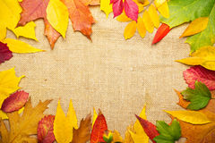 Frame from multicolored autumn leaves royalty free stock images