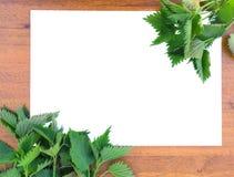Frame of nettle Royalty Free Stock Image