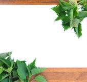 Frame with nettles Royalty Free Stock Photos