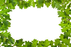 Frame of oak leaves in backlight Royalty Free Stock Images