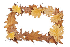 Frame of oak leaves Royalty Free Stock Photos