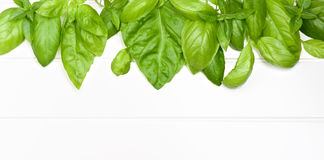 Frame Of Basil Leafs Royalty Free Stock Image