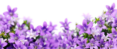 Free Frame Of Bluebells Stock Photography - 37902852