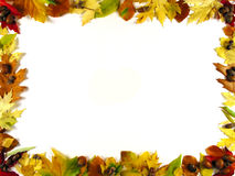 Frame Of Leafs III Royalty Free Stock Images