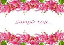 Free Frame Of Pink Lilies Stock Image - 15082131