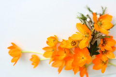 Frame Of Yellow Flowers Royalty Free Stock Photography